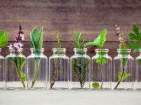 植物から病気の治療に役立つ成分が見つかる理由