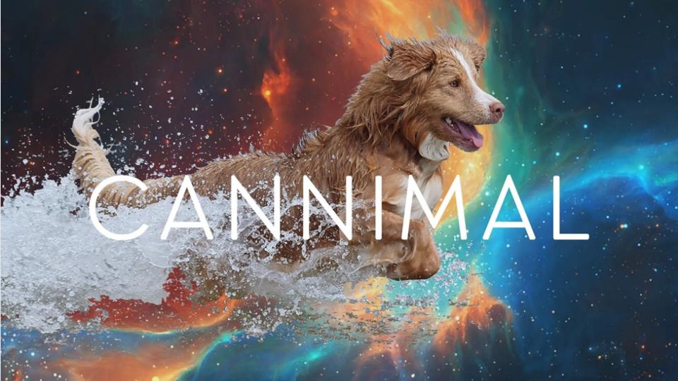 【CANNIMAL】ペット用CBDオイルという選択肢を