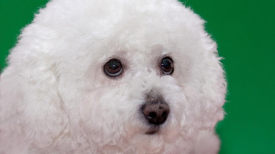 犬の痙攣発作『てんかん』にCBDは有効か?